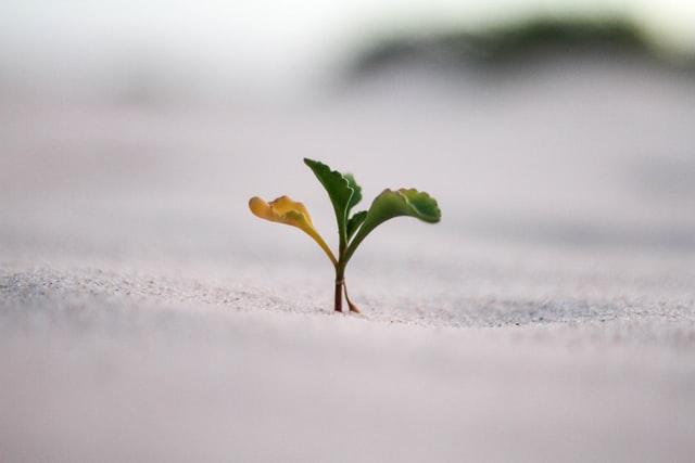 24 chiavi della crescita